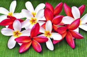 Okura & Associates Waipahu Hawaii